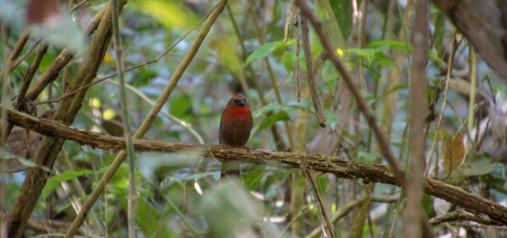 rainforest near panama canal bird in the trees