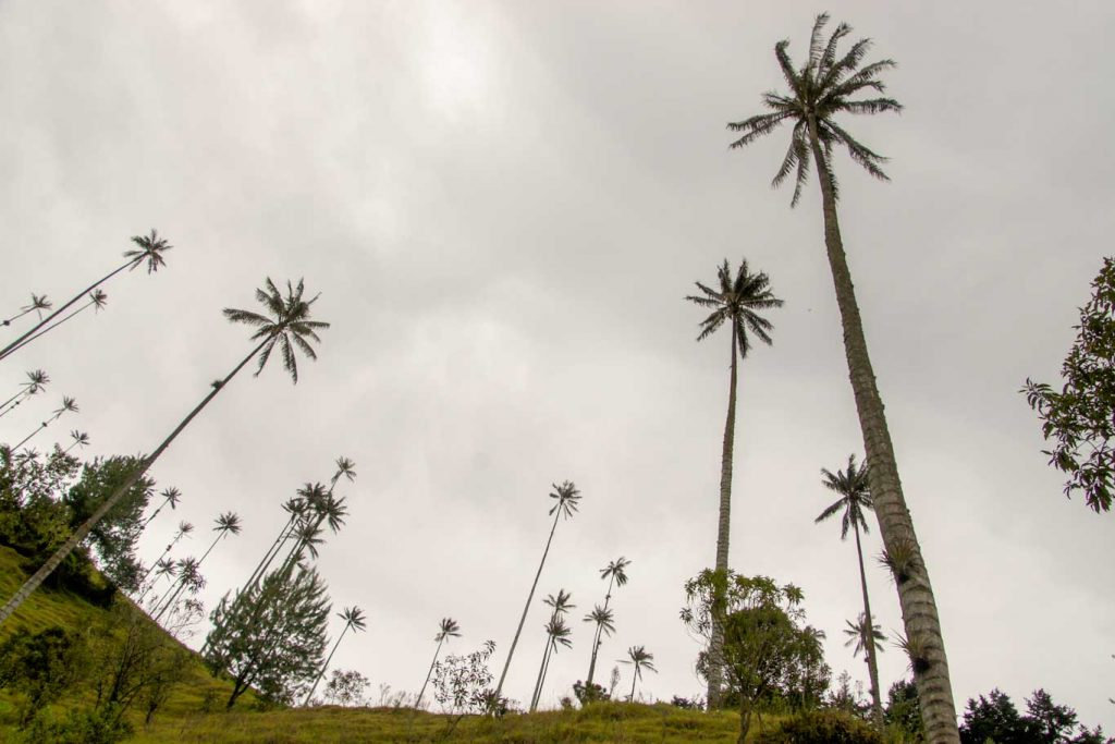 what to see in coffee region cocora valley