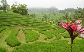 Bali center tour - What to see around Ubud