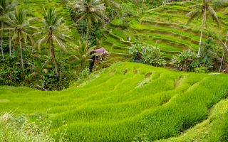 Ubud or Seminyak in Bali? Seminyak or Ubud best places, best beaches to choose