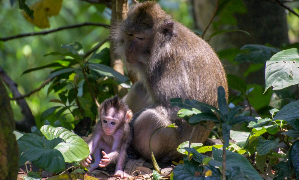 Ubud in 1 day - Monkey forest