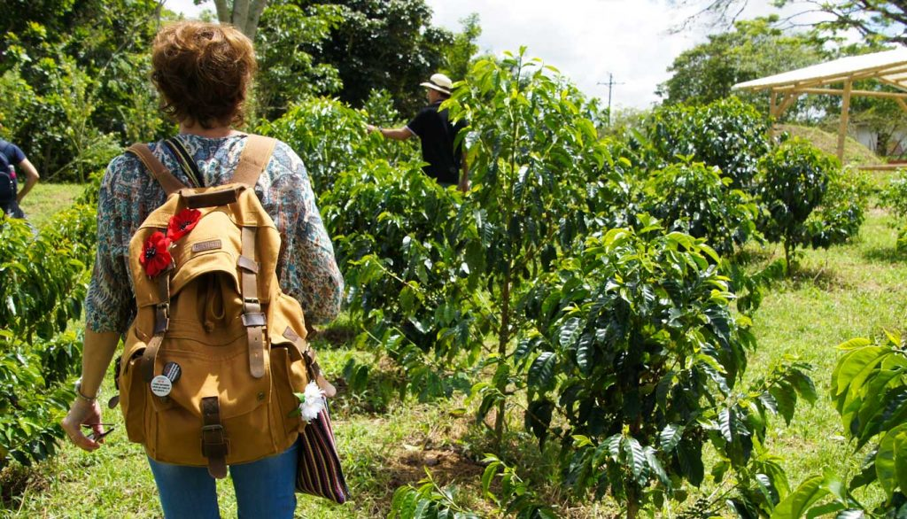 Coffee region in Colombia how to visit a coffee farm