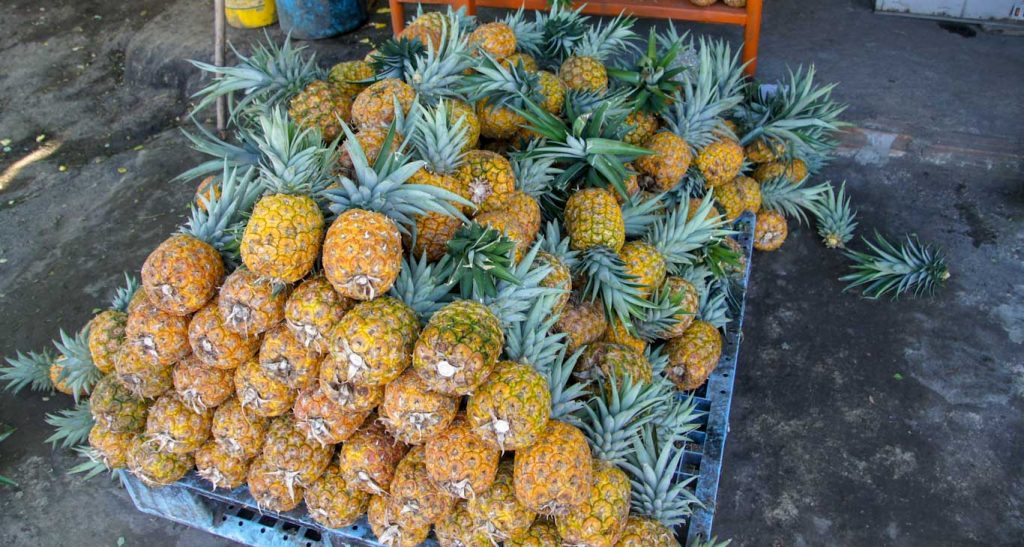 How to go from salento to medellin A STOP TO EAT PINAPLES