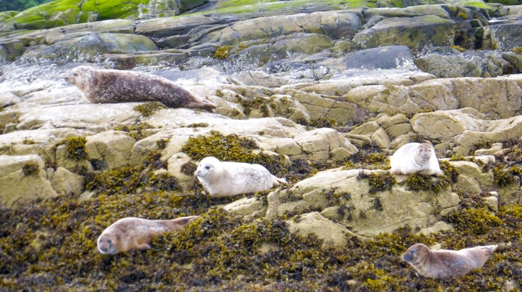 2 weeks in Scotland Go and see Plockton seals