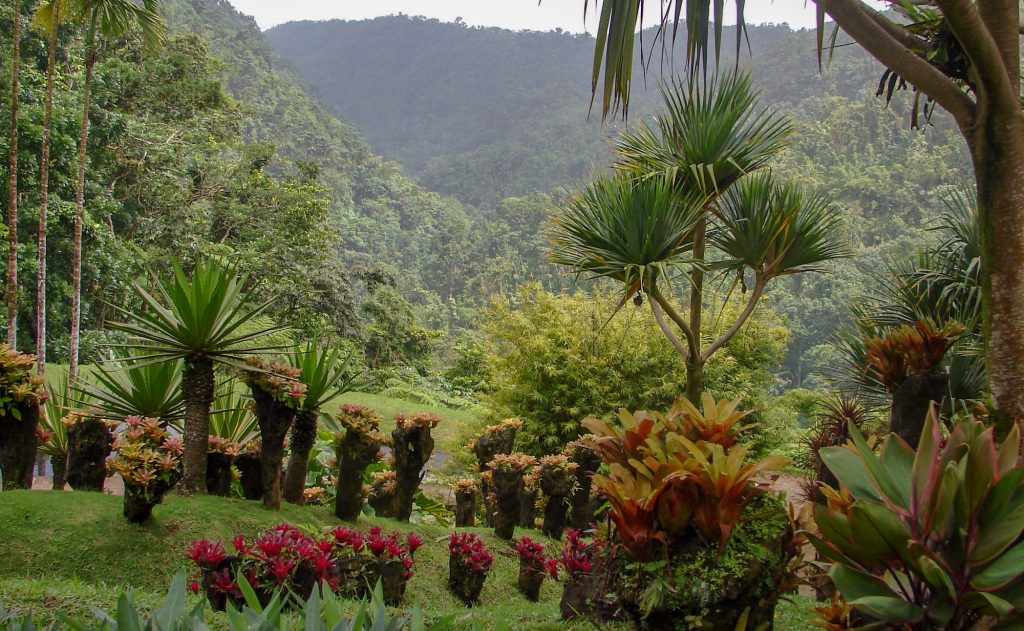 Discovery of the Center of Martinique BALATA GARDEN